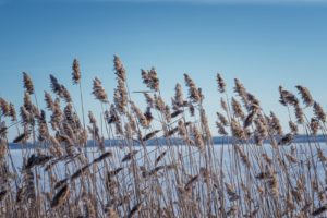 Травы на берегу
